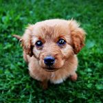 Adopting A Dog PLR (25 Articles)