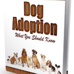 Dog Adoption Autoresponder (12 Issues)
