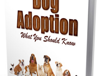 Dog Adoption Autoresponder